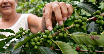 Rainforest Alliance Certified Coffee