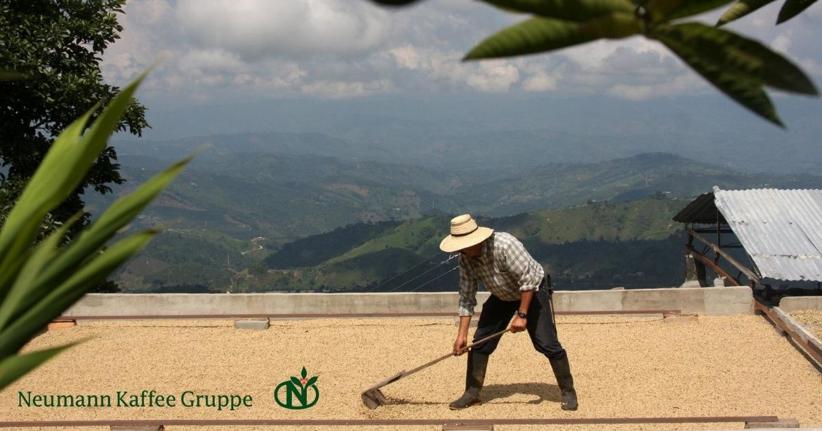 Sustainability In Coffee